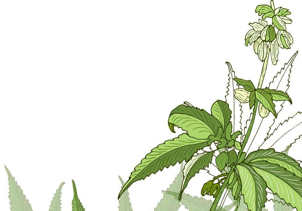 Learn More About The European CBD Flower Market
